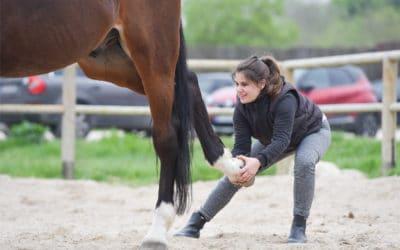 Entre pratique ostéopathique et initiation à l'équitation…