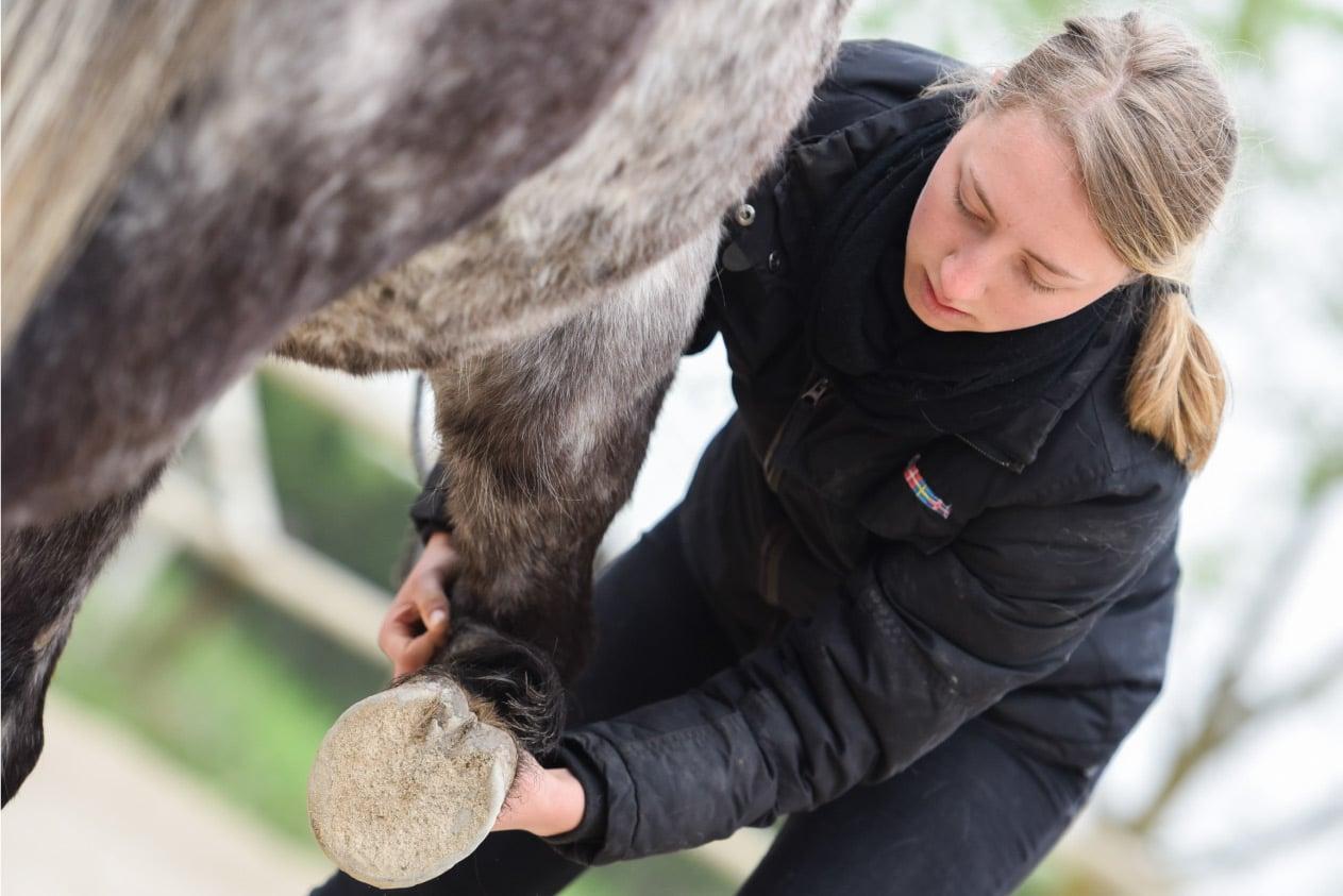 Isema-école-ostéopathie-animale-cours-cheval