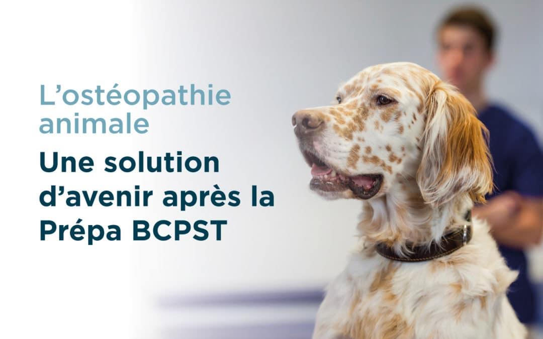 L'ostéopathie animale, voie royale d'orientation après une prépa BCPST