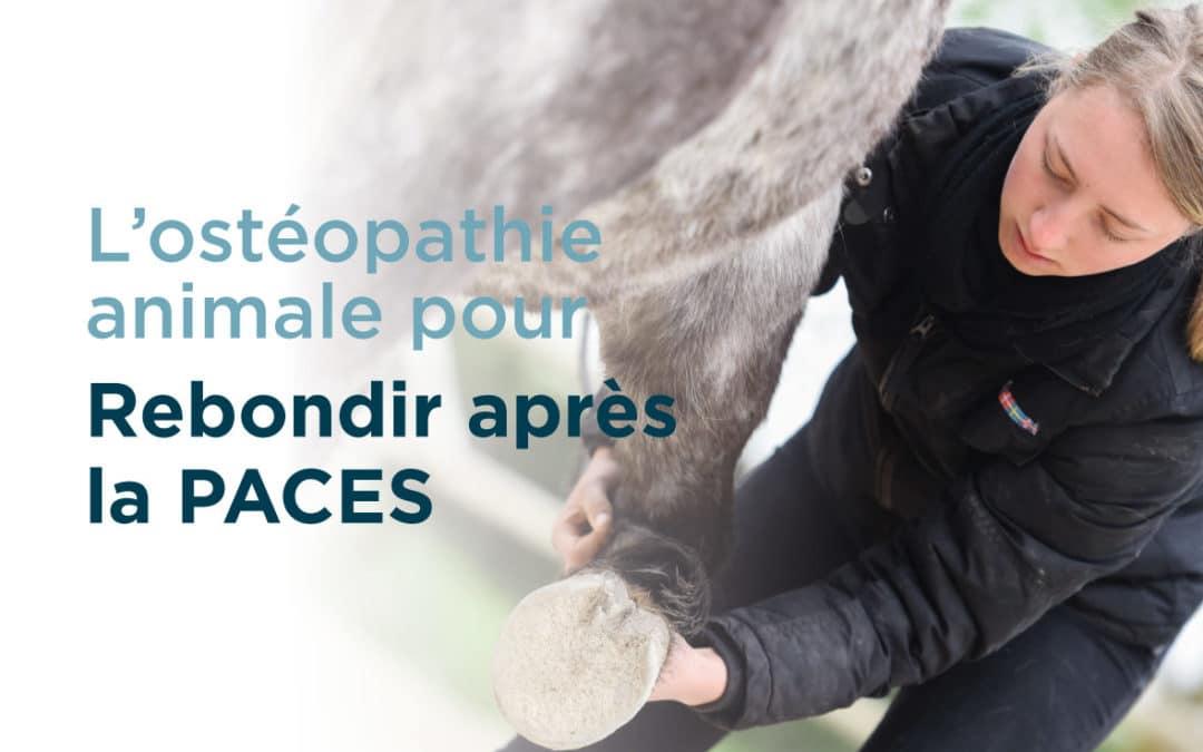 Que faire en cas d'échec en PACES ? Envisagez l'ostéopathie animale !